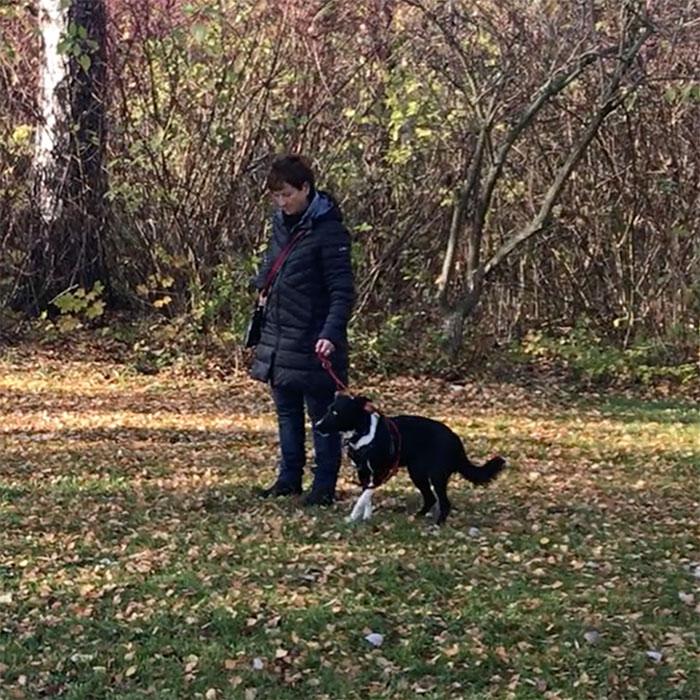 Tierschutzhund mit Angst-Aggression