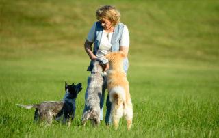 Antje-Hebel im Hundetraining mit ihren Hunden