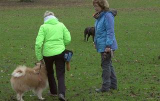 Antje-Hebel- Hunde Training