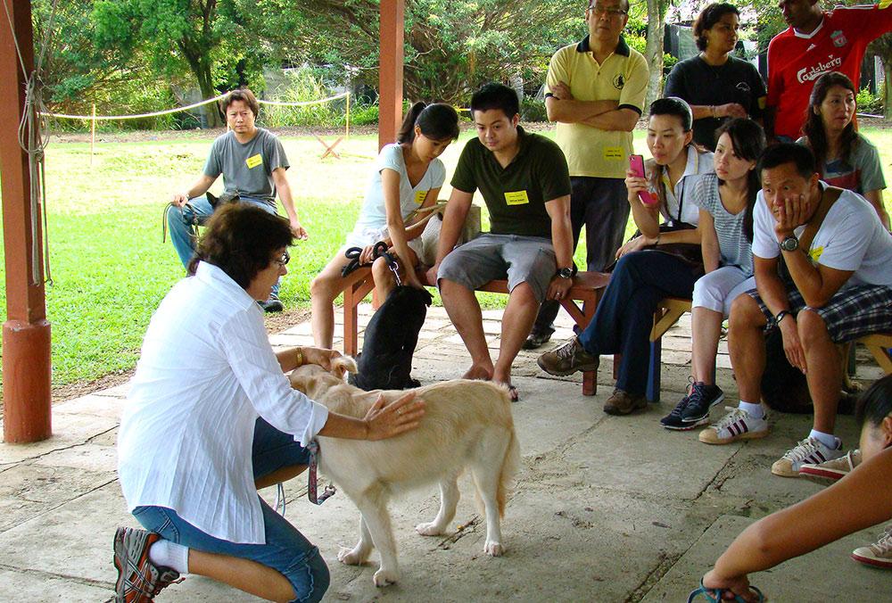 Hundetraining GSD-Club Singapore